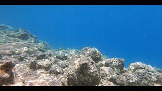 Эгейское море. Яхтинг. Рыбалка. Подводная охота. ДОРАДО. ОСЬМИНОГИ. Часть 2