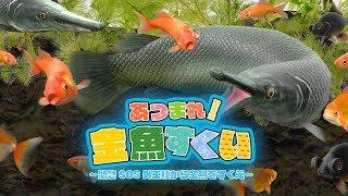 あつまれ!金魚すくい~緊急SOS外来種から金魚をすくえ~-NintendoSwitch