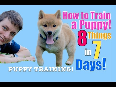 How to Train Your Puppy 8 Things in 7 Days! (STOP Puppy Biting ...