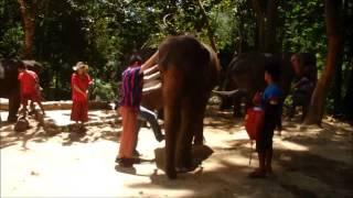 Patara Elephant Farm Sept 2014