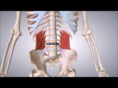 Rheumatoide Arthritis linken Kniegelenkes