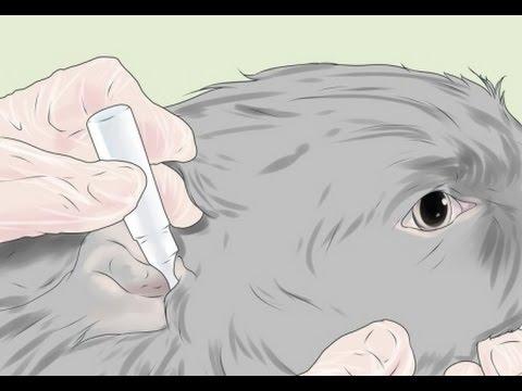 El hongo sobre las uñas de los pie que curar