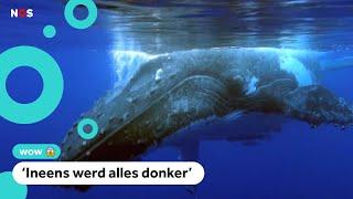 Visser overleeft 30 seconden in bek van walvis