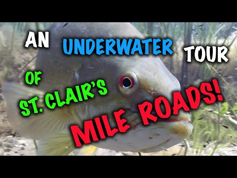 An Underwater Tour of Lake St. Clair's Mile Roads