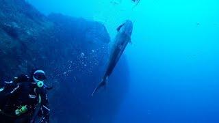 Scuba Spearfishing Tournament - Big Bang 2018