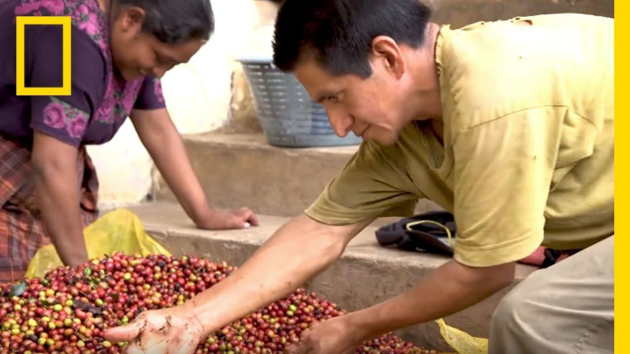Coffee Farmers Hopeful For Their Dying Crops | Short Film Showcase thumbnail