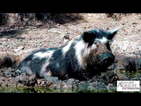 Pinag-aaralan sa mga worm Krasnodar
