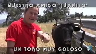 Nuestro Amigo Juanito, Un Toro Muy Goloso