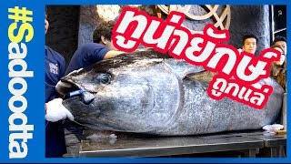 แล่ปลาทูน่ายักษ์ 412กิโล ใหญ่สุดที่นำเข้ามาในไทย #sadoodta