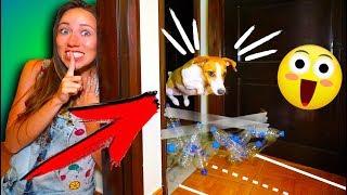 Прятки с Препятствиями Собака Попалась в Доме Играем Крит | Elli Di Pets