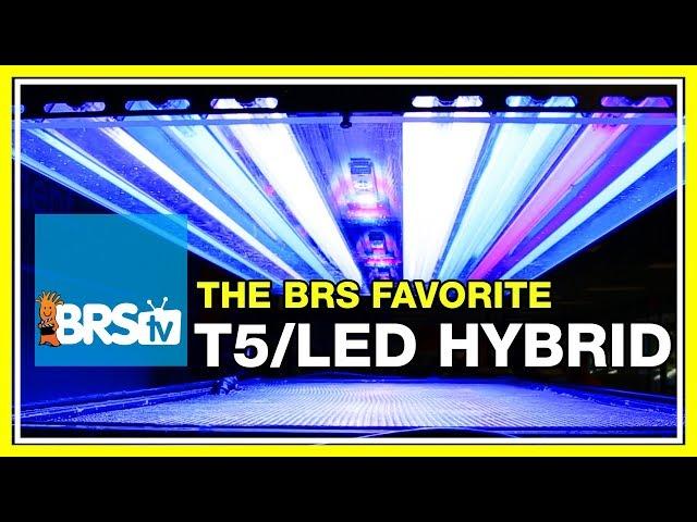 Week 22: Reef tank lighting: What's on our tanks? The T5 LED Hybrid!  | 52 Weeks of Reefing #BRS160