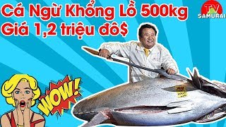 Cách Người Nhật xử lý cá 500kg khiến người xem thán phục | Trị giá con cá lên đến 1,2 triệu $