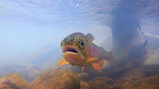 Fly Fishing for Virginia Trout - Exploring Big Stony Creek