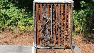 Wax Moths In My BeeHive