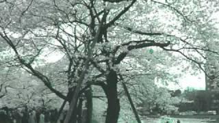 4 Strings- Summer Sun