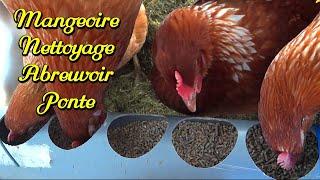 بناء منزل الدجاج ، أربعة. التنظيف ، زرع ، الحوض الصغير ، المغذية
