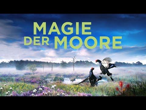 Naturfilmer Jan Haf - Magie der Moore