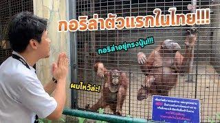 ไปสบตา กอริล่า ตัวแรกในไทย กับสวนสัตว์ลอยฟ้าแห่งแรกที่จะถูกลืม