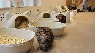 Hidup Bersama 7 Kucing (INDO SUB)