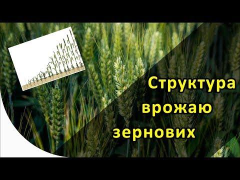 Структурные элементы урожая