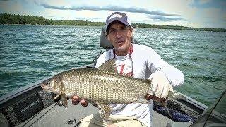 Catching Whitefish 101