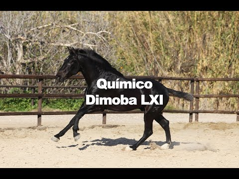 Químico Dimoba (17-3-2019)