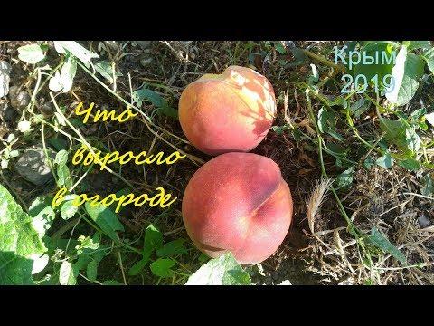 Крым, Судак 2019. Что выросло в огороде: Персики, арбузы, миндаль и другое