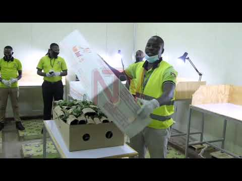 Horticultural dealers plead for the opening of Entebbe Airpot