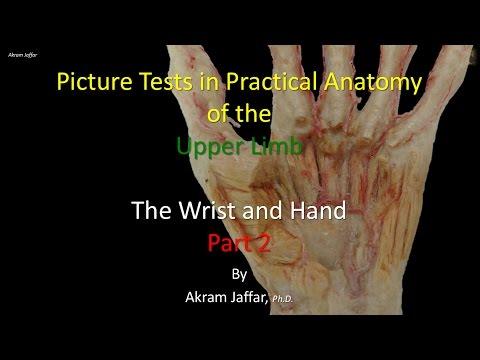 Test obrazkowy - anatomia ręki i nadgarstka część 1