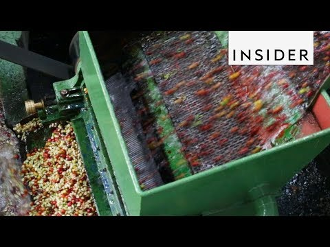 How Coffee Is Made In Costa Rica