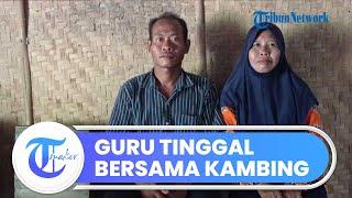 Cerita Pilu Seorang Guru Honorer di Ngawi yang Terpaksa Tinggal Bersama Kambing