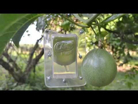 Envases para frutas