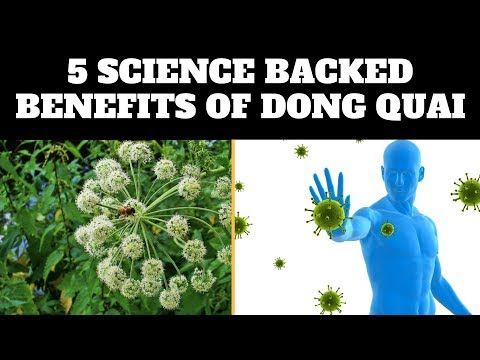 Dong Quai - 5 Science Backed Benefits Of Dong Quai