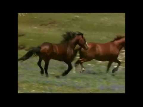 Песня коня цыганских кровей- А.Розенбаум.