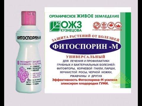 Фитоспорин-М Для растений. Как правильно использовать.