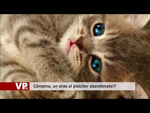 Câmpina, un oraș al pisicilor abandonate!?