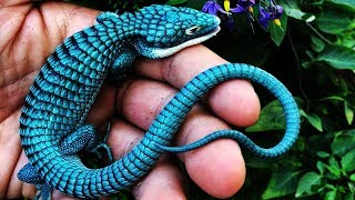 10 Most Beautiful Lizards In The World