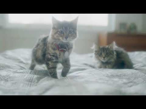 Hills Katzenfutter kaufen Schweiz