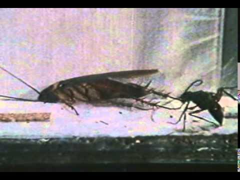 Асд фракция 2 применение для человека польза против паразитов