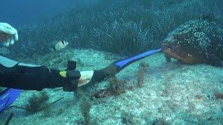 preview picture of video 'Porto Pollo Diving e Kite'