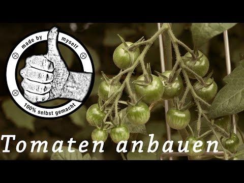 Tomaten ausgeizen, anbauen und pflegen 2018