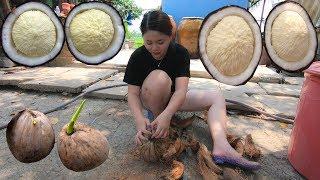 Cùng em gái miền tây Ăn thử Mộng Dừa khổng lồ