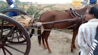 1,2,3 Of Jaipur Horse Race