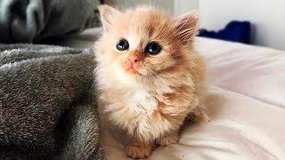🐾Крошечный бездомный котёнок обрёл любящий дом и превратился в красивейшего котика
