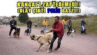 10 KÖPEK BİR ARAYA GELİNCE İŞLER KIZIŞTI POLİS BASTI!! (Pitbull , Kangal , Rottweiler , Alman Kurdu)
