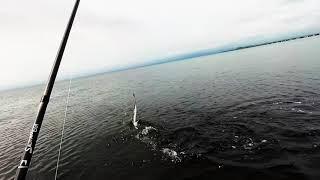 Морская рыбалка владивосток что и где ловится