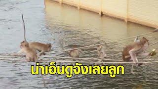 น่าเอ็นดู! แก๊งลิงไต่เชือกออกหาอาหาร หลังน้ำท่วมอุทยานโกสัมพี