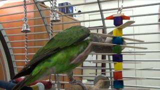 Popsicle Cluster Parrot Toy