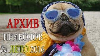 ЛУЧШИЕ ПРИКОЛЫ АРХИВ за ЛЕТО 2016