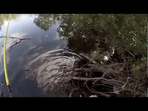 Winter pond buck bass bed fishing